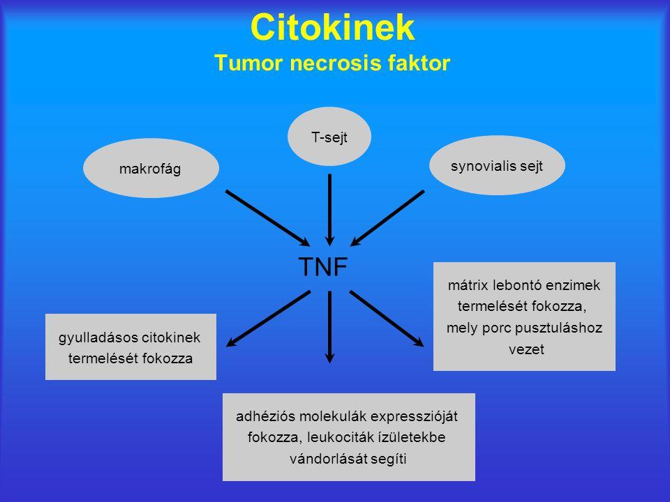 Citokinek Tumor necrosis faktor synovialis sejt T-sejt makrofág gyulladásos citokinek termelését fokozza mátrix lebontó enzimek termelését fokozza, mely porc pusztuláshoz vezet TNF adhéziós molekulák expresszióját fokozza, leukociták ízületekbe vándorlását segíti