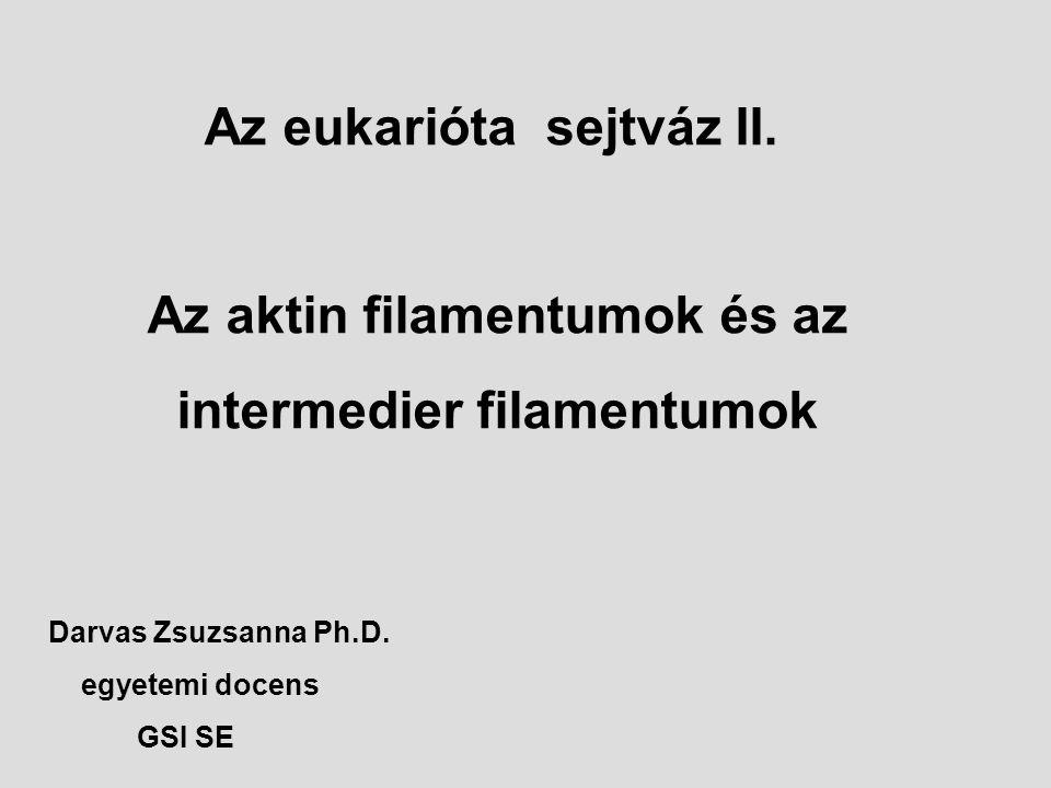 Az eukarióta sejtváz II. Az aktin filamentumok és az intermedier filamentumok Darvas Zsuzsanna Ph.D. egyetemi docens GSI SE