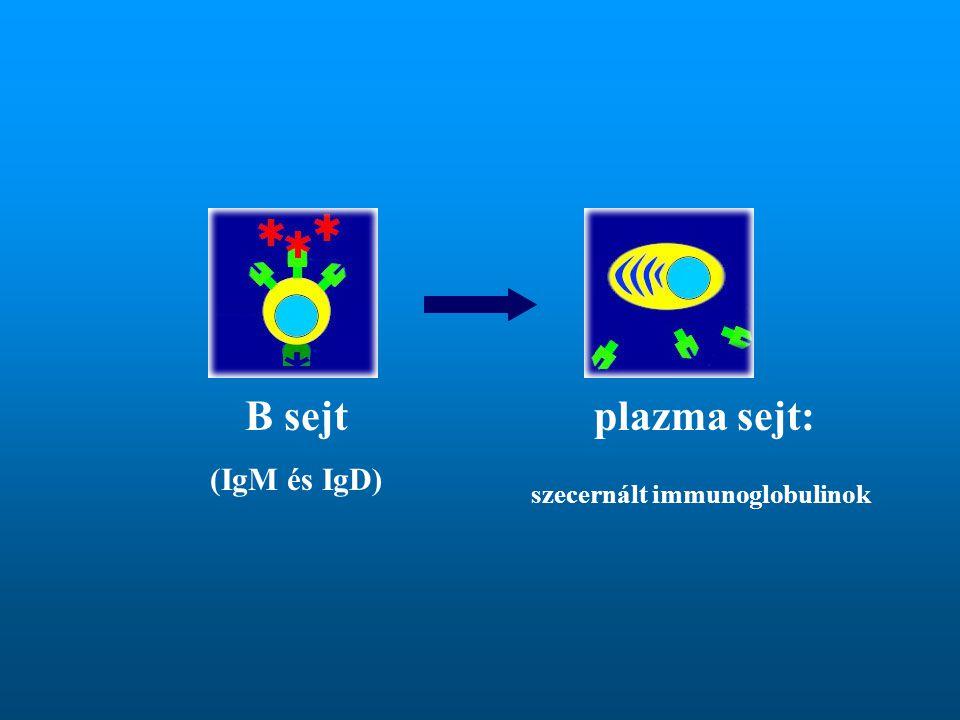 B sejt (IgM és IgD) plazma sejt: szecernált immunoglobulinok