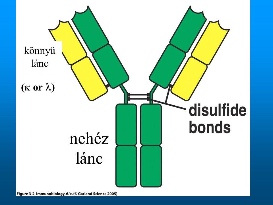 (  or ) nehéz lánc könnyű lánc