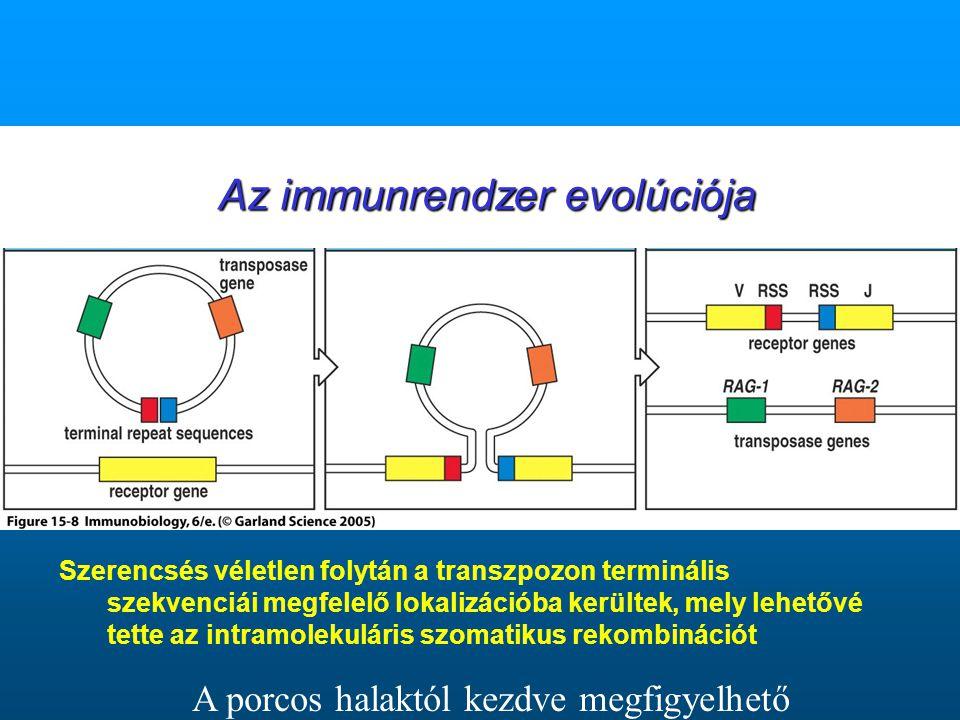 Szerencsés véletlen folytán a transzpozon terminális szekvenciái megfelelő lokalizációba kerültek, mely lehetővé tette az intramolekuláris szomatikus rekombinációt A porcos halaktól kezdve megfigyelhető Az immunrendzer evolúciója