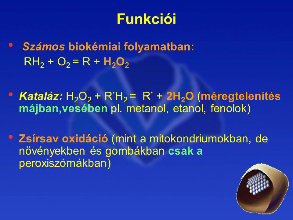 Funkciói Számos biokémiai folyamatban: RH 2 + O 2 = R + H 2 O 2 Kataláz: H 2 O 2 + R'H 2 = R' + 2H 2 O (méregtelenítés májban,vesében pl.