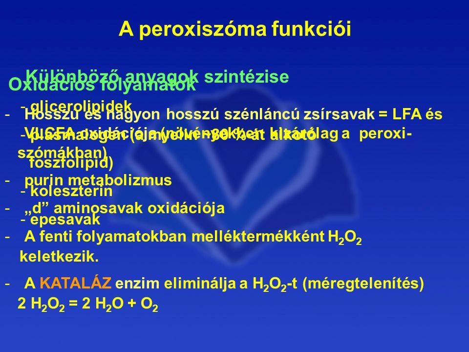"""A peroxiszóma funkciói Oxidációs folyamatok -Hosszú és nagyon hosszú szénláncú zsírsavak = LFA és VLCFA oxidációja (növényekben kizárólag a peroxi- szómákban) -purin metabolizmus -""""d aminosavak oxidációja -A fenti folyamatokban melléktermékként H 2 O 2 keletkezik."""