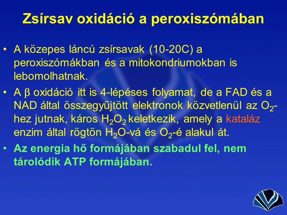 Zsírsav oxidáció a peroxiszómában A közepes láncú zsírsavak (10-20C) a peroxiszómákban és a mitokondriumokban is lebomolhatnak.