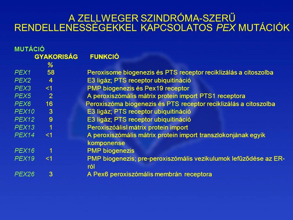 A ZELLWEGER SZINDRÓMA-SZERŰ RENDELLENESSÉGEKKEL KAPCSOLATOS PEX MUTÁCIÓK MUTÁCIÓ GYAKORISÁG FUNKCIÓ % PEX1 58 Peroxisome biogenezis és PTS receptor reciklizálás a citoszolba PEX2 4 E3 ligáz; PTS receptor ubiquitináció PEX3 <1 PMP biogenezis és Pex19 receptor PEX5 2 A peroxiszómális mátrix protein import PTS1 receptora PEX6 16 Peroxiszóma biogenezis és PTS receptor reciklizálás a citoszolba PEX10 3 E3 ligáz; PTS receptor ubiquitináció PEX12 9 E3 ligáz; PTS receptor ubiquitináció PEX13 1 Peroxiszóálisl mátrix protein import PEX14 <1 A peroxiszómális mátrix protein import transzlokonjának egyik komponense PEX16 1 PMP biogenezis PEX19 <1 PMP biogenezis; pre-peroxiszómális vezikulumok lefűződése az ER- ról PEX26 3 A Pex6 peroxiszómális membrán receptora