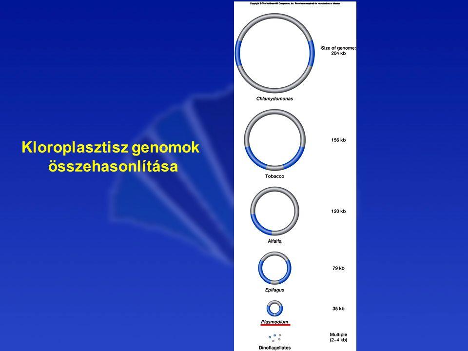 Kloroplasztisz genomok összehasonlítása