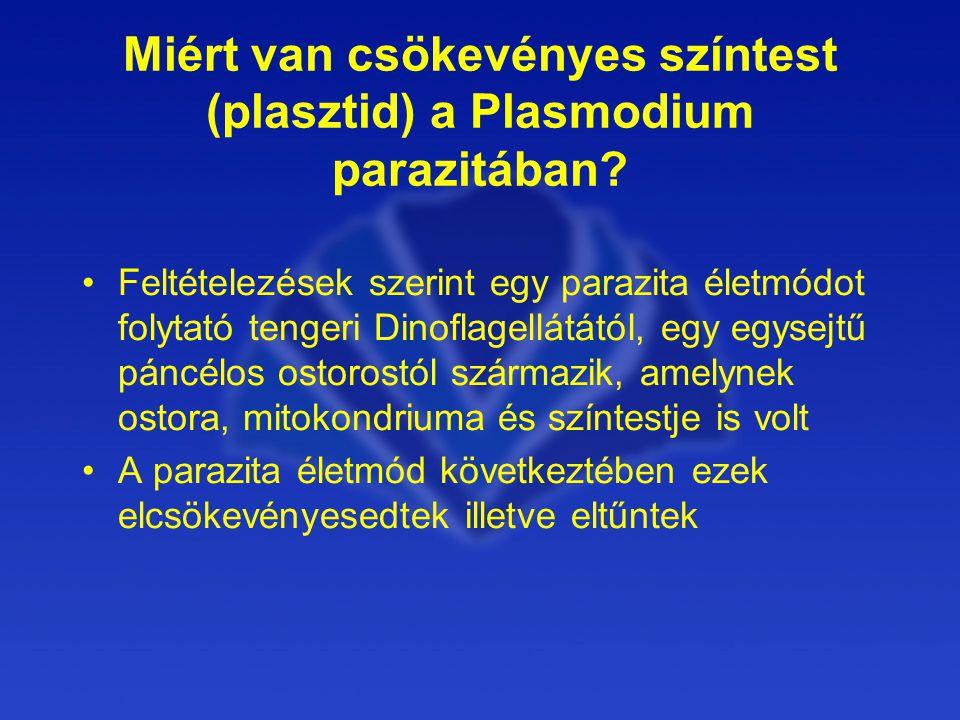 Miért van csökevényes színtest (plasztid) a Plasmodium parazitában.