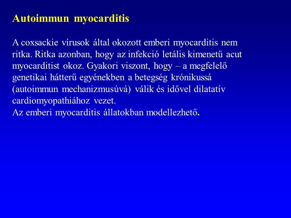 Autoimmun myocarditis A coxsackie vírusok által okozott emberi myocarditis nem ritka. Ritka azonban, hogy az infekció letális kimenetű acut myocarditi