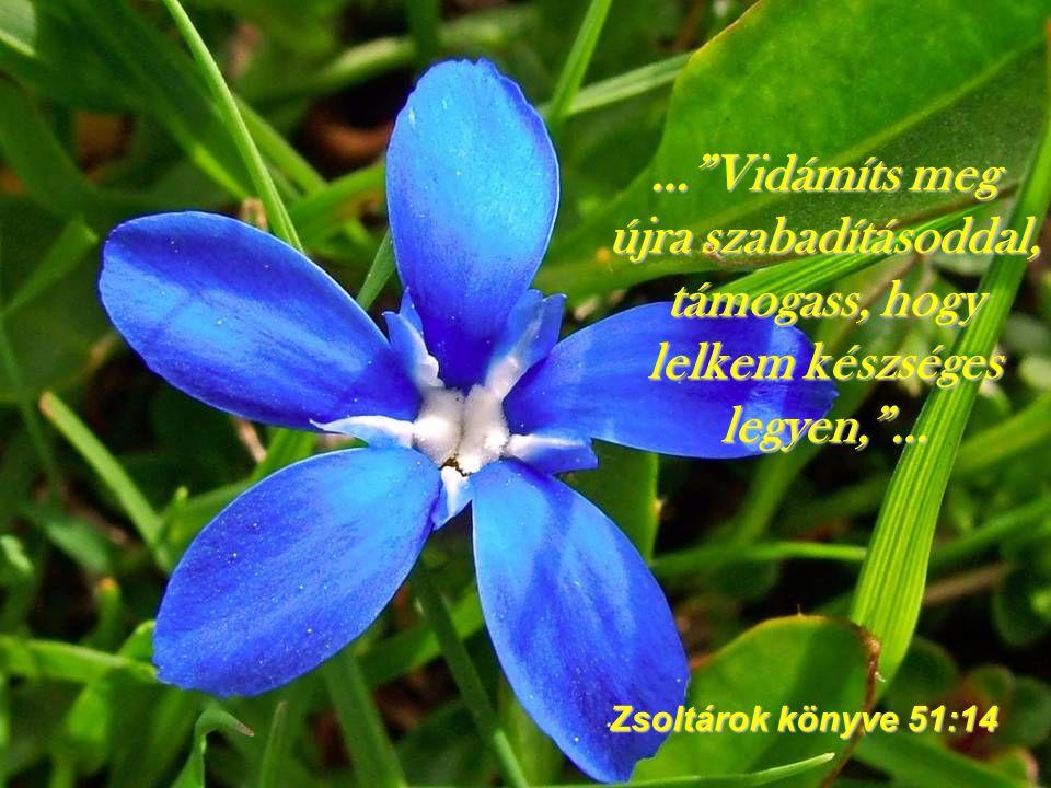 """…""""Gyönyörködj az Úrban, és megadja szíved kéréseit!""""... Zsoltárok könyve 37:4"""