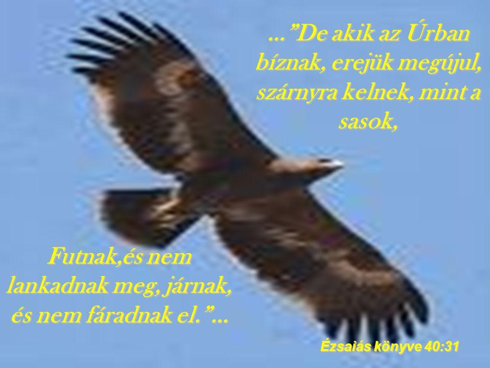 … De akik az Úrban bíznak, erejük megújul, szárnyra kelnek, mint a sasok, Ézsaiás könyve 40:31 Futnak,és nem lankadnak meg, járnak, és nem fáradnak el. …