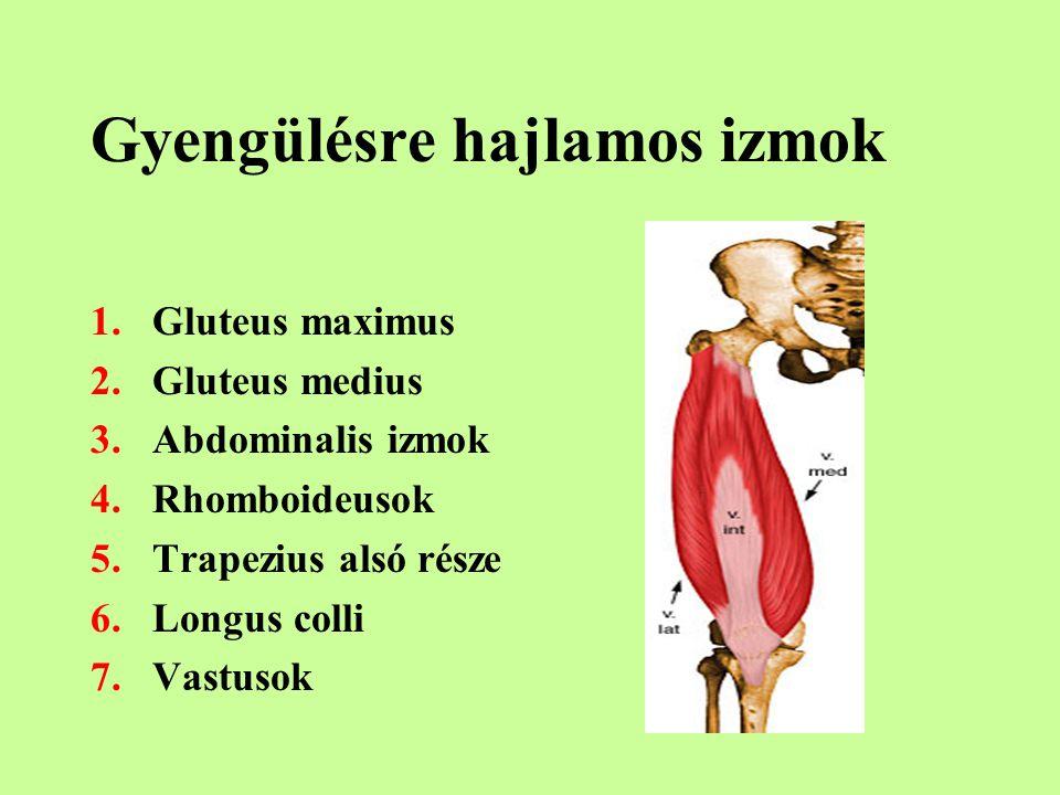 Gyengülésre hajlamos izmok 1.Gluteus maximus 2.Gluteus medius 3.Abdominalis izmok 4.Rhomboideusok 5.Trapezius alsó része 6.Longus colli 7.Vastusok