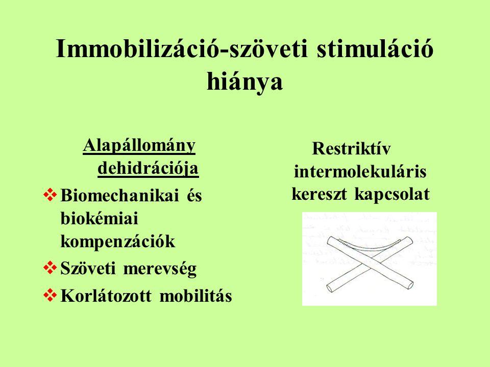Immobilizáció-szöveti stimuláció hiánya Alapállomány dehidrációja  Biomechanikai és biokémiai kompenzációk  Szöveti merevség  Korlátozott mobilitás Restriktív intermolekuláris kereszt kapcsolat