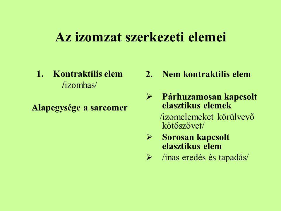 Az izomzat szerkezeti elemei 1.Kontraktilis elem /izomhas/ Alapegysége a sarcomer 2.Nem kontraktilis elem  Párhuzamosan kapcsolt elasztikus elemek /izomelemeket körülvevő kötőszövet/  Sorosan kapcsolt elasztikus elem  /inas eredés és tapadás/