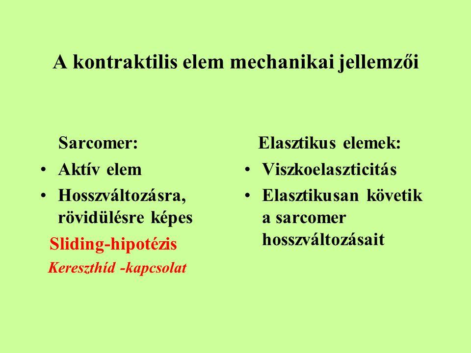 A kontraktilis elem mechanikai jellemzői Sarcomer: Aktív elem Hosszváltozásra, rövidülésre képes Sliding-hipotézis Kereszthíd -kapcsolat Elasztikus elemek: Viszkoelaszticitás Elasztikusan követik a sarcomer hosszváltozásait