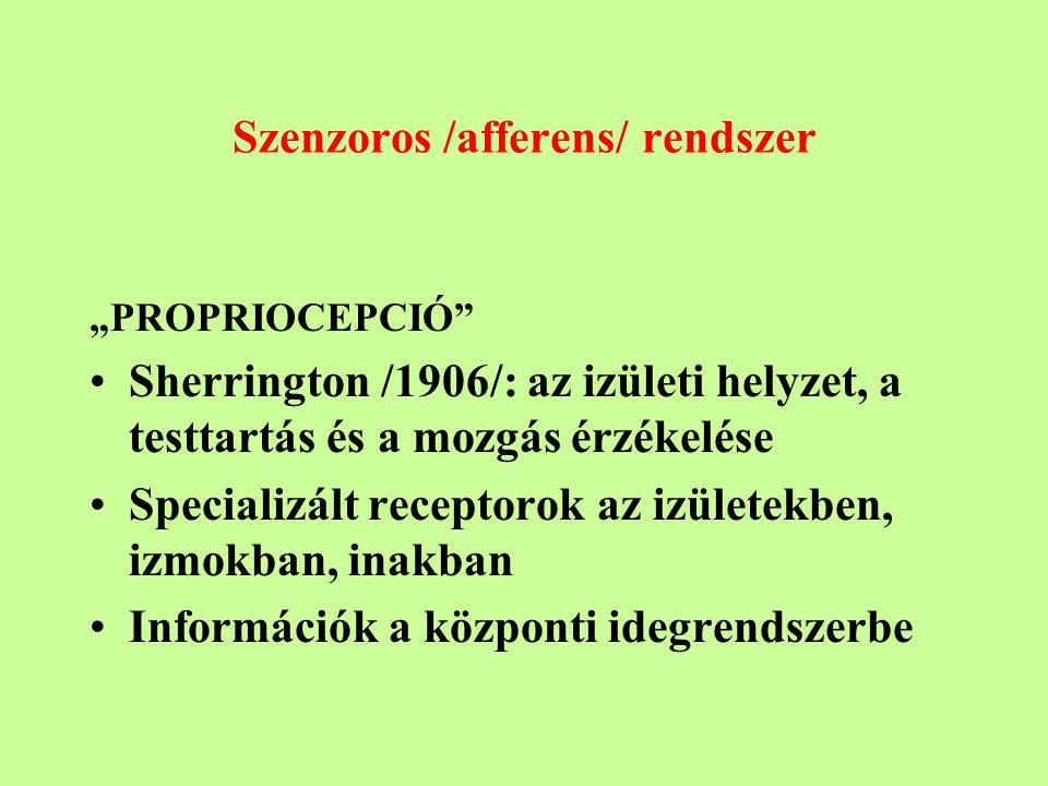 """Szenzoros /afferens/ rendszer """"PROPRIOCEPCIÓ Sherrington /1906/: az izületi helyzet, a testtartás és a mozgás érzékelése Specializált receptorok az izületekben, izmokban, inakban Információk a központi idegrendszerbe"""