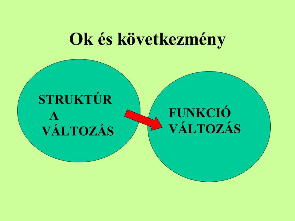 Ok és következmény FUNKCIÓ VÁLTOZÁS STRUKTÚR A VÁLTOZÁS