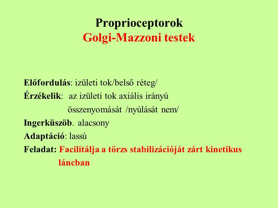 Proprioceptorok Golgi-Mazzoni testek Előfordulás: izületi tok/belső réteg/ Érzékelik: az izületi tok axiális irányú összenyomását /nyúlását nem/ Ingerküszöb.