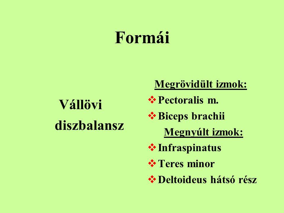 Szerkezetének legfontosabb komponensei Alapállomány  Gél  Víz  Glycosamino – glycan / GAG / Fibrótikus komponens  Kollagén  Elasztin