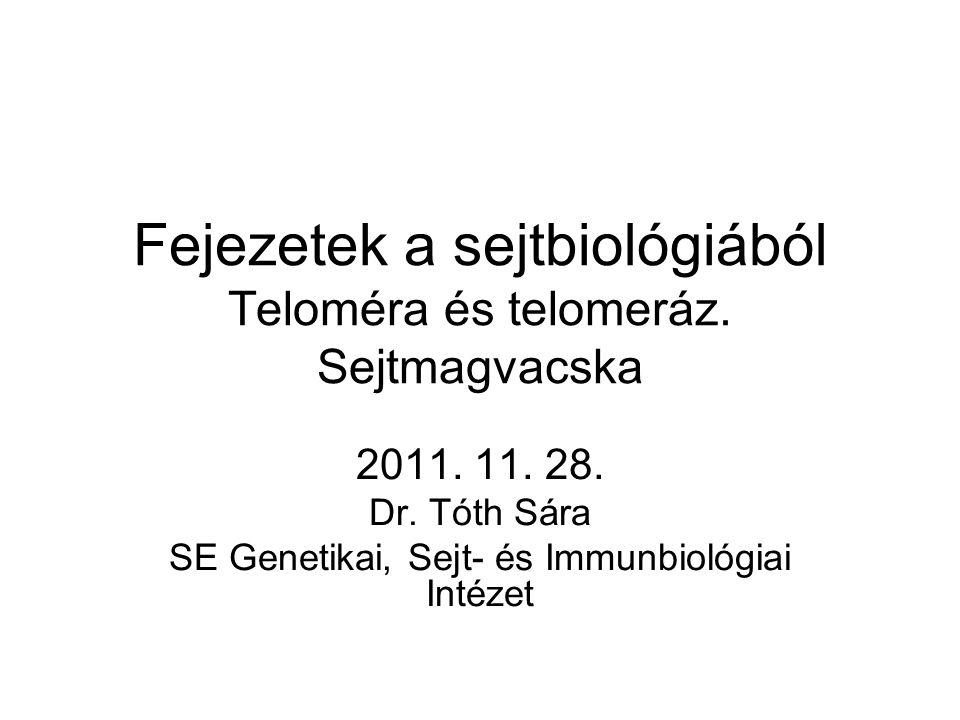Fejezetek a sejtbiológiából Teloméra és telomeráz. Sejtmagvacska 2011. 11. 28. Dr. Tóth Sára SE Genetikai, Sejt- és Immunbiológiai Intézet