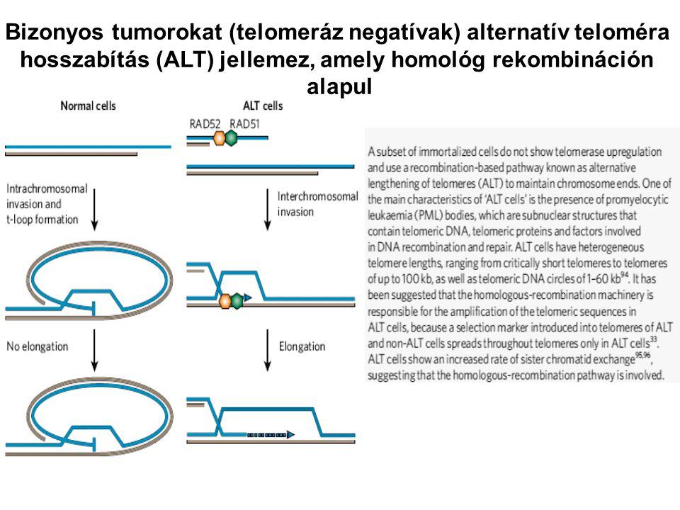 Bizonyos tumorokat (telomeráz negatívak) alternatív teloméra hosszabítás (ALT) jellemez, amely homológ rekombináción alapul