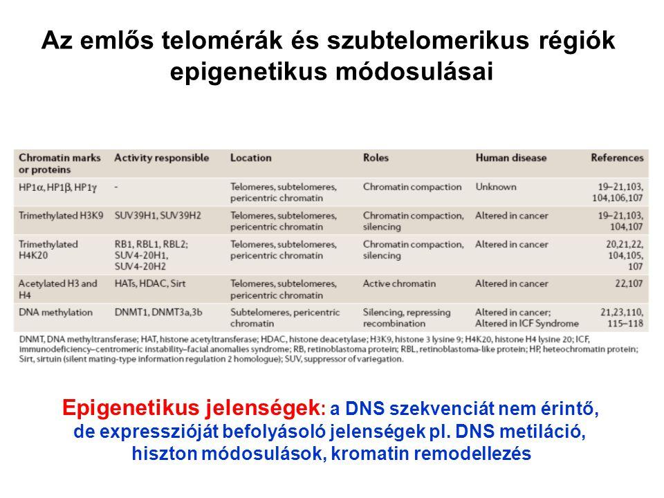 Az emlős telomérák és szubtelomerikus régiók epigenetikus módosulásai Epigenetikus jelenségek : a DNS szekvenciát nem érintő, de expresszióját befolyá