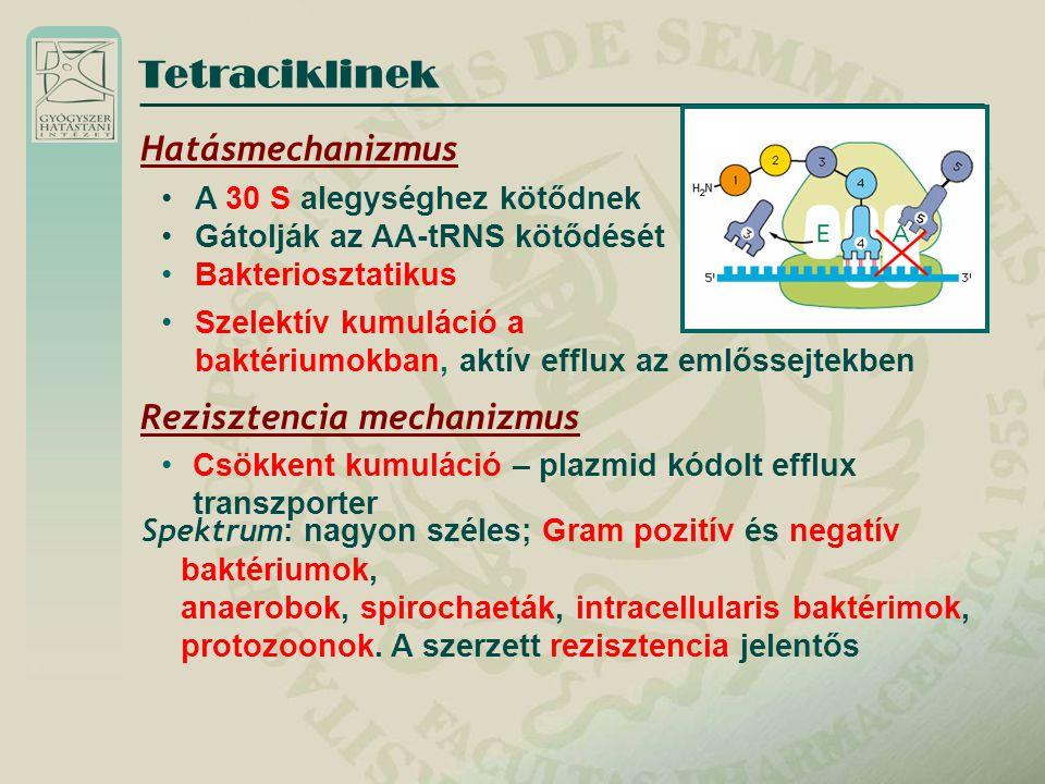 Tetraciklinek Hatásmechanizmus A 30 S alegységhez kötődnek Gátolják az AA-tRNS kötődését Bakteriosztatikus Szelektív kumuláció a baktériumokban, aktív