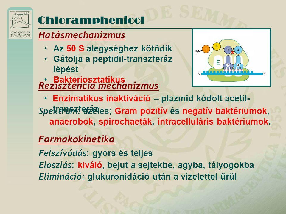Chloramphenicol Hatásmechanizmus Az 50 S alegységhez kötődik Gátolja a peptidil-transzferáz lépést Bakteriosztatikus Rezisztencia mechanizmus Enzimati