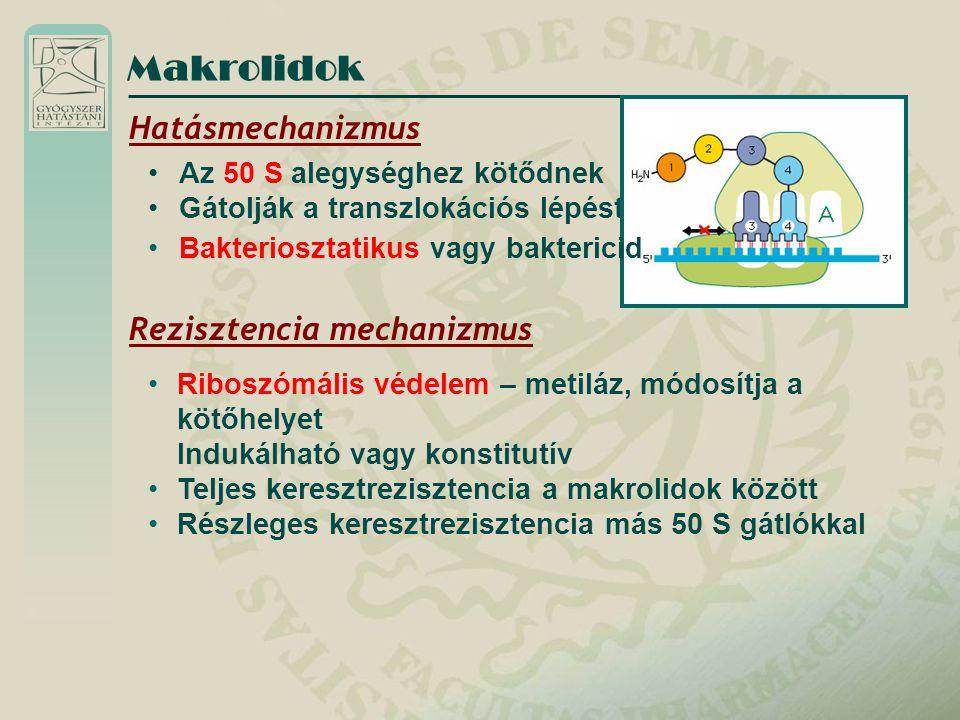Makrolidok Hatásmechanizmus Az 50 S alegységhez kötődnek Gátolják a transzlokációs lépést Rezisztencia mechanizmus Riboszómális védelem – metiláz, mód