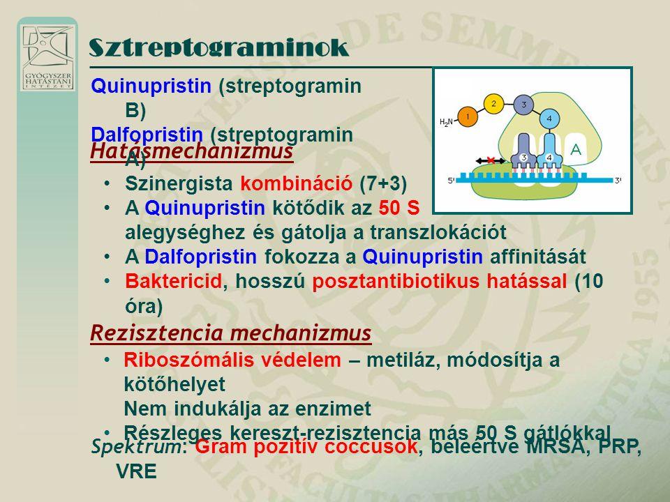 Sztreptograminok Hatásmechanizmus Szinergista kombináció (7+3) A Quinupristin kötődik az 50 S alegységhez és gátolja a transzlokációt A Dalfopristin f