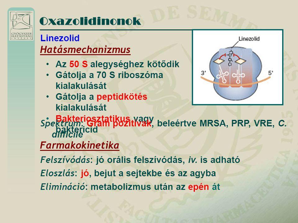 Oxazolidinonok Hatásmechanizmus Az 50 S alegységhez kötődik Gátolja a 70 S riboszóma kialakulását Gátolja a peptidkötés kialakulását Bakteriosztatikus