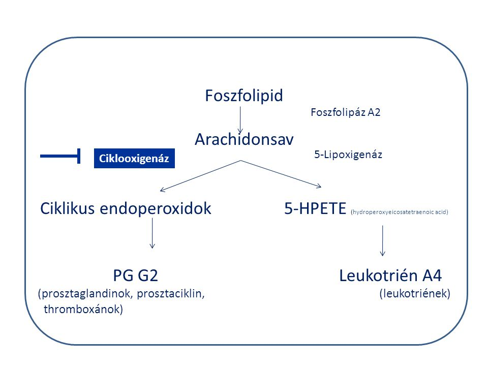 az első órák makrofágok IL-1 IL-6 IL-12 TNF-  C3 komplement aktiválás IL-8 prosztaglandin, LTB4 C5a, C3a NK hízósejt oedema Hisztamin, LTB4 ér endothel