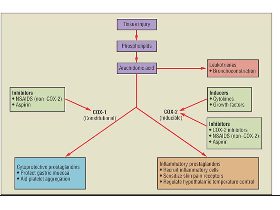 Kortikoszteroidok Annexin 1 (lipocortin 1), secretory leukoprotease inhibitor (SLPI), IL-10