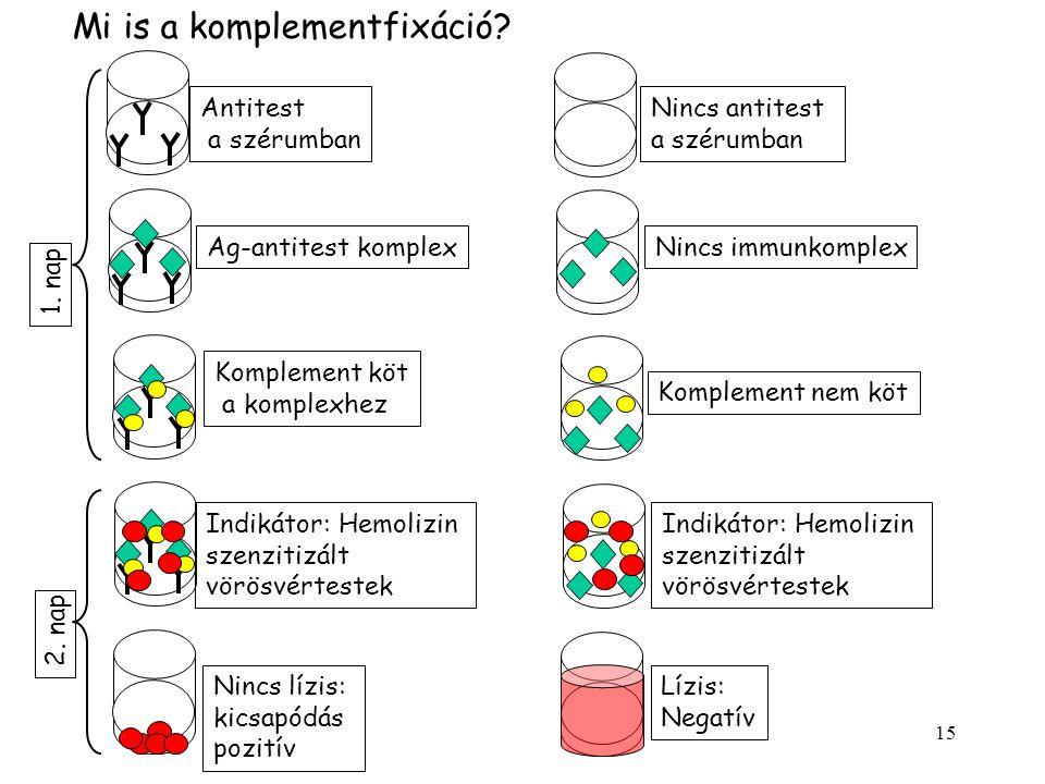 15 Nincs antitest a szérumban Antitest a szérumban Ag-antitest komplexNincs immunkomplex Komplement köt a komplexhez Komplement nem köt Nincs lízis: kicsapódás pozitív Lízis: Negatív Indikátor: Hemolizin szenzitizált vörösvértestek Indikátor: Hemolizin szenzitizált vörösvértestek 1.
