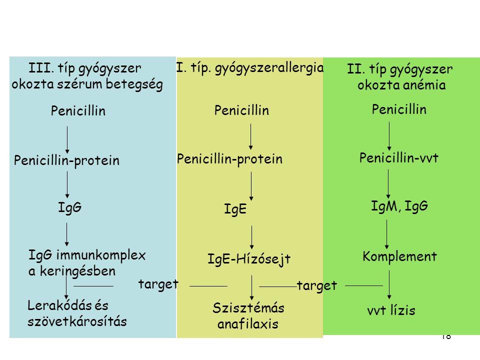 18 Penicillin Penicillin-protein IgG IgG immunkomplex a keringésben Lerakódás és szövetkárosítás Penicillin-protein IgE IgE-Hízósejt Penicillin Szisztémás anafilaxis Penicillin Penicillin-vvt IgM, IgG vvt lízis III.