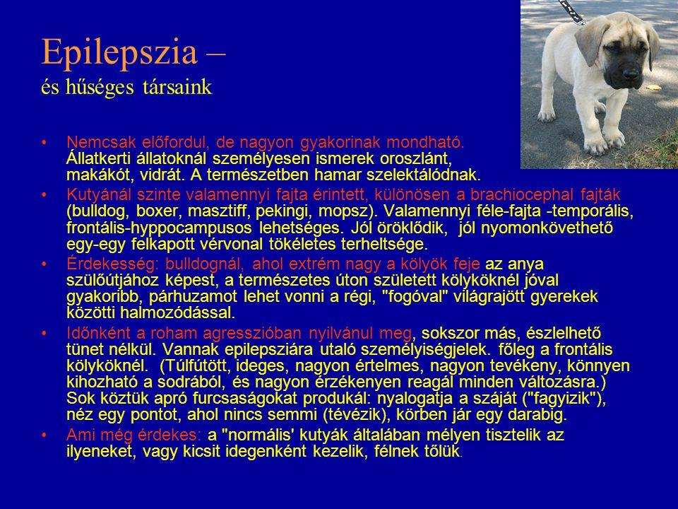 Epilepszia – és hűséges társaink Nemcsak előfordul, de nagyon gyakorinak mondható. Állatkerti állatoknál személyesen ismerek oroszlánt, makákót, vidrá