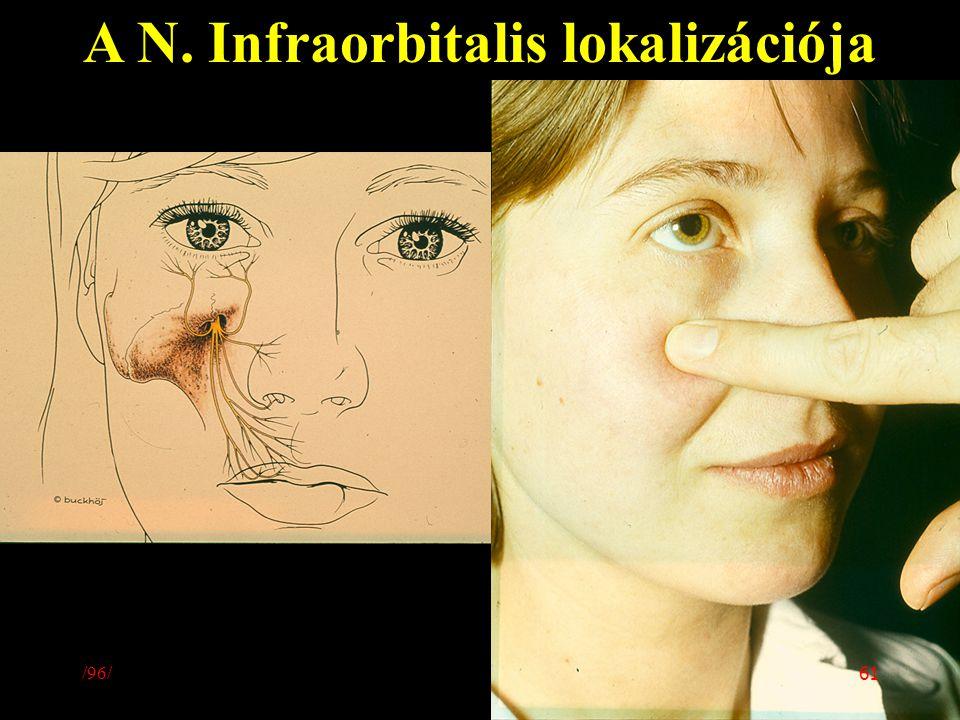 A N. Infraorbitalis lokalizációja /96/ 61