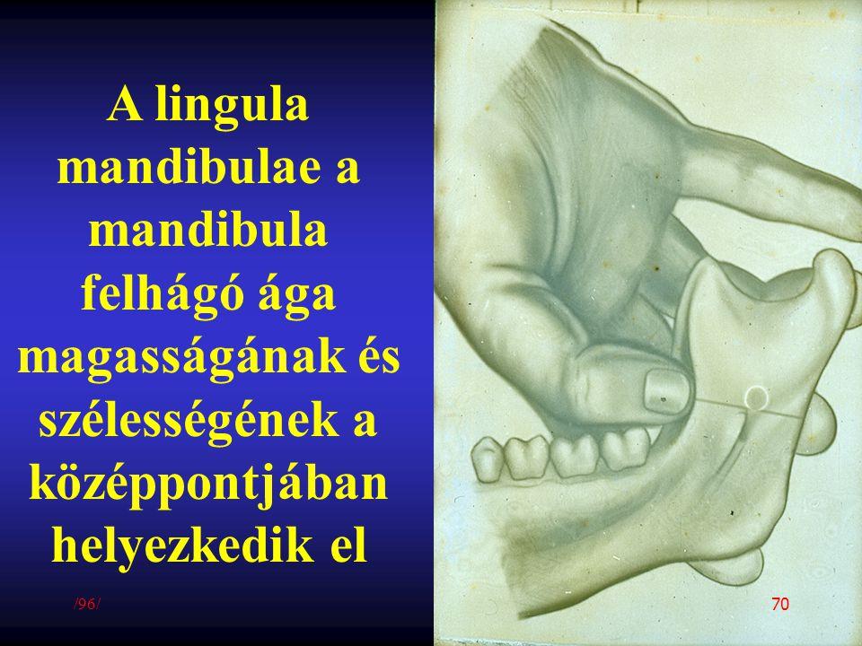 A lingula mandibulae a mandibula felhágó ága magasságának és szélességének a középpontjában helyezkedik el /96/ 70
