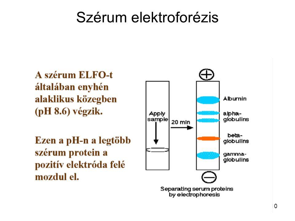 10 Szérum elektroforézis