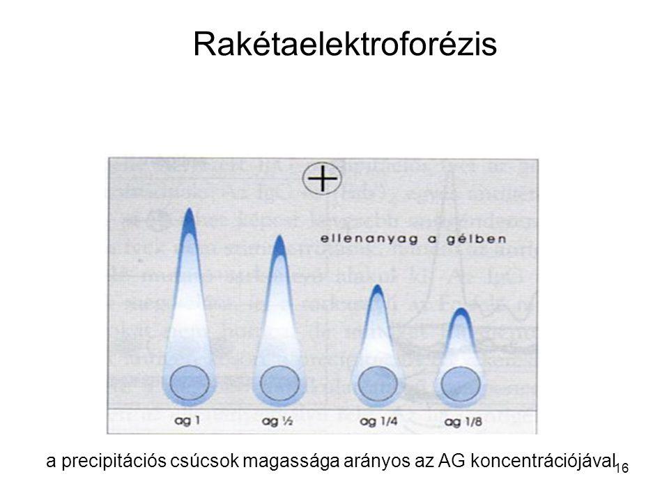 16 Rakétaelektroforézis a precipitációs csúcsok magassága arányos az AG koncentrációjával