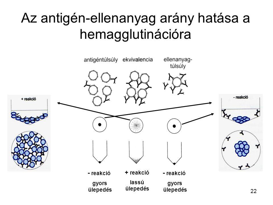 22 - reakció gyors ülepedés - reakció gyors ülepedés + reakció lassú ülepedés Az antigén-ellenanyag arány hatása a hemagglutinációra