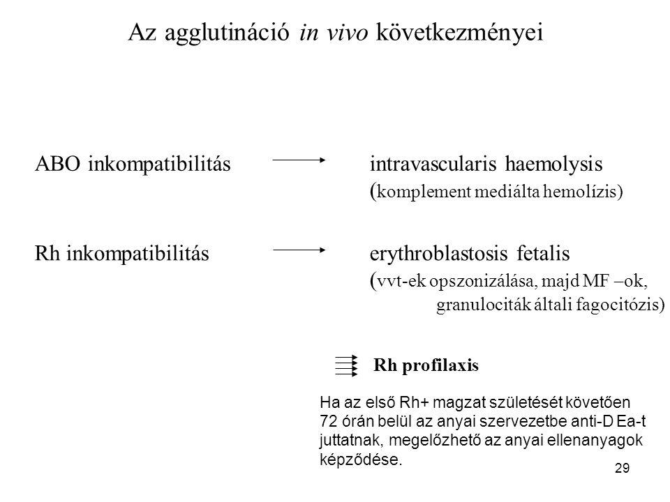 29 Az agglutináció in vivo következményei ABO inkompatibilitásintravascularis haemolysis ( komplement mediálta hemolízis) Rh inkompatibilitáserythrobl