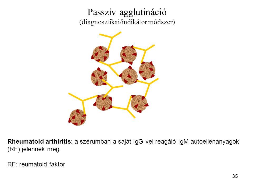 35 Passzív agglutináció (diagnosztikai/indikátor módszer) Rheumatoid arthiritis: a szérumban a saját IgG-vel reagáló IgM autoellenanyagok (RF) jelenne