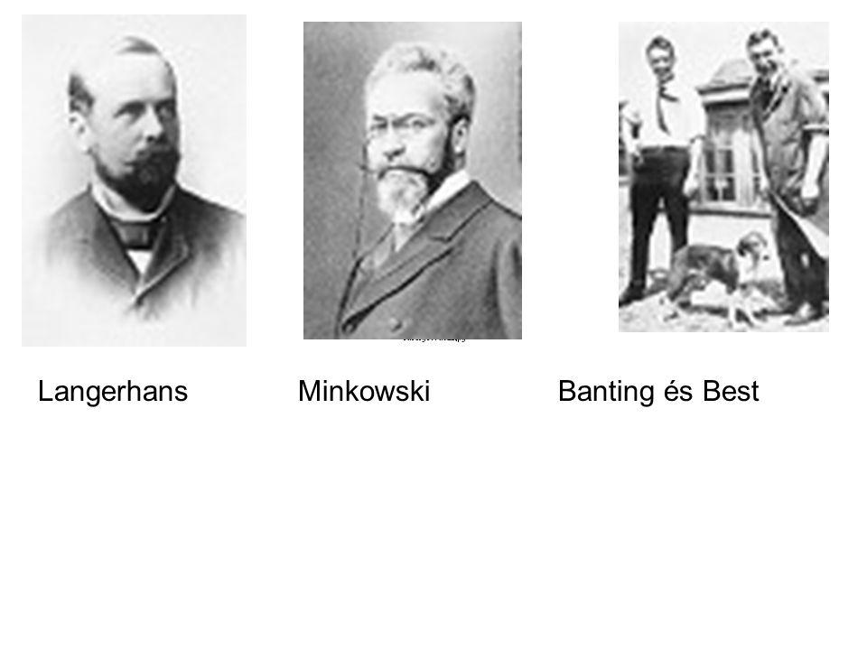 LangerhansMinkowskiBanting és Best