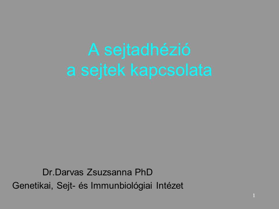 1 A sejtadhézió a sejtek kapcsolata Dr.Darvas Zsuzsanna PhD Genetikai, Sejt- és Immunbiológiai Intézet