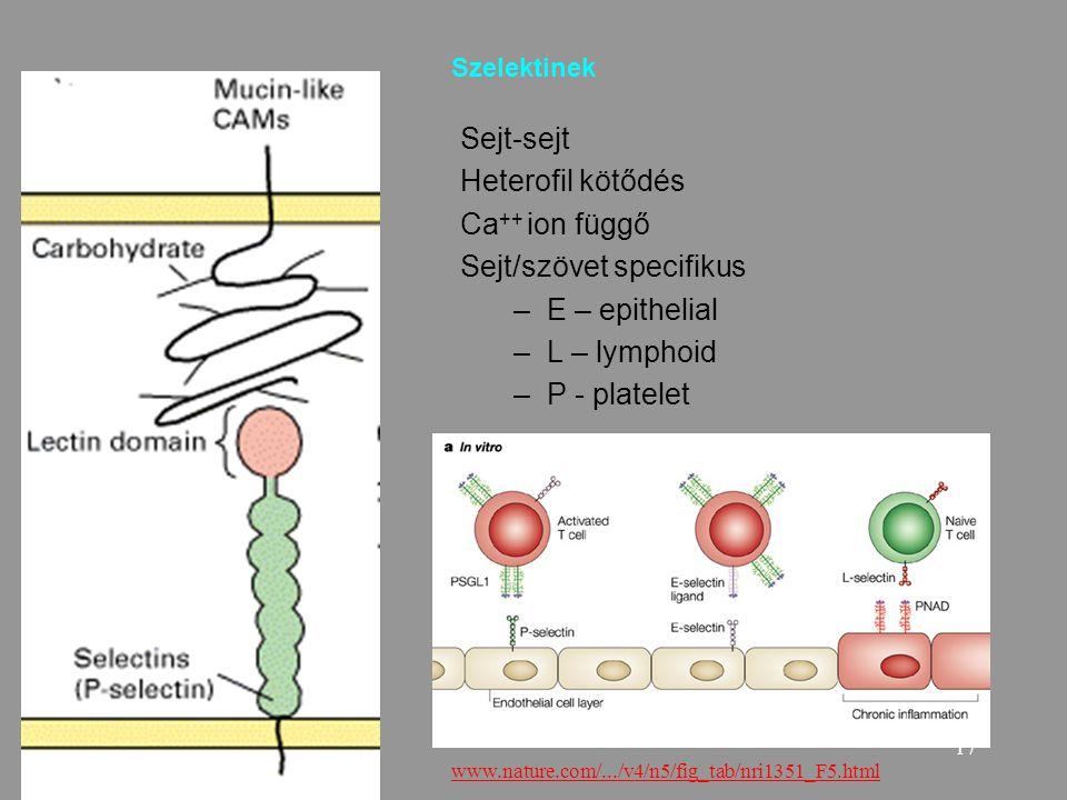17 Szelektinek Sejt-sejt Heterofil kötődés Ca ++ ion függő Sejt/szövet specifikus –E – epithelial –L – lymphoid –P - platelet www.nature.com/.../v4/n5/fig_tab/nri1351_F5.html