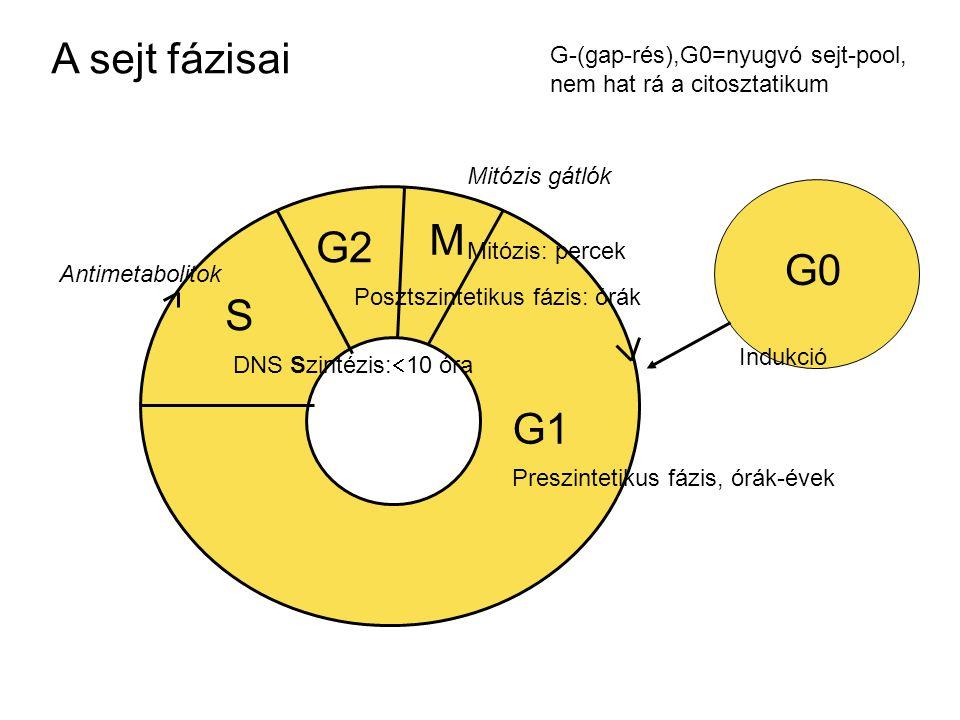 G0 M G2 S G1 G-(gap-rés),G0=nyugvó sejt-pool, nem hat rá a citosztatikum Preszintetikus fázis, órák-évek Mitózis: percek Posztszintetikus fázis: órák DNS Szintézis:  10 óra A sejt fázisai Indukció Antimetabolitok Mitózis gátlók