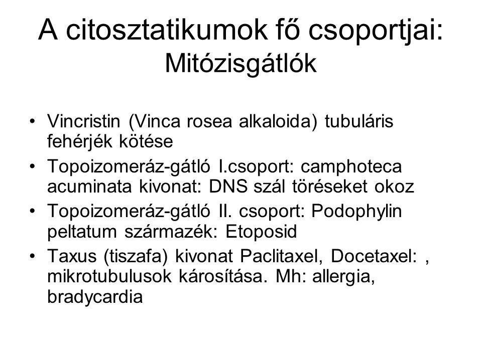A citosztatikumok fő csoportjai: Mitózisgátlók Vincristin (Vinca rosea alkaloida) tubuláris fehérjék kötése Topoizomeráz-gátló I.csoport: camphoteca acuminata kivonat: DNS szál töréseket okoz Topoizomeráz-gátló II.