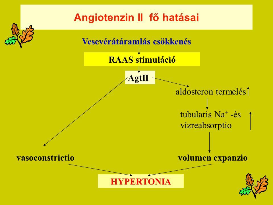 Angiotenzin II fő hatásai Vesevérátáramlás csökkenés RAAS stimuláció AgtII vasoconstrictio HYPERTONIA volumen expanzio aldosteron termelés tubularis Na + -és vízreabsorptio