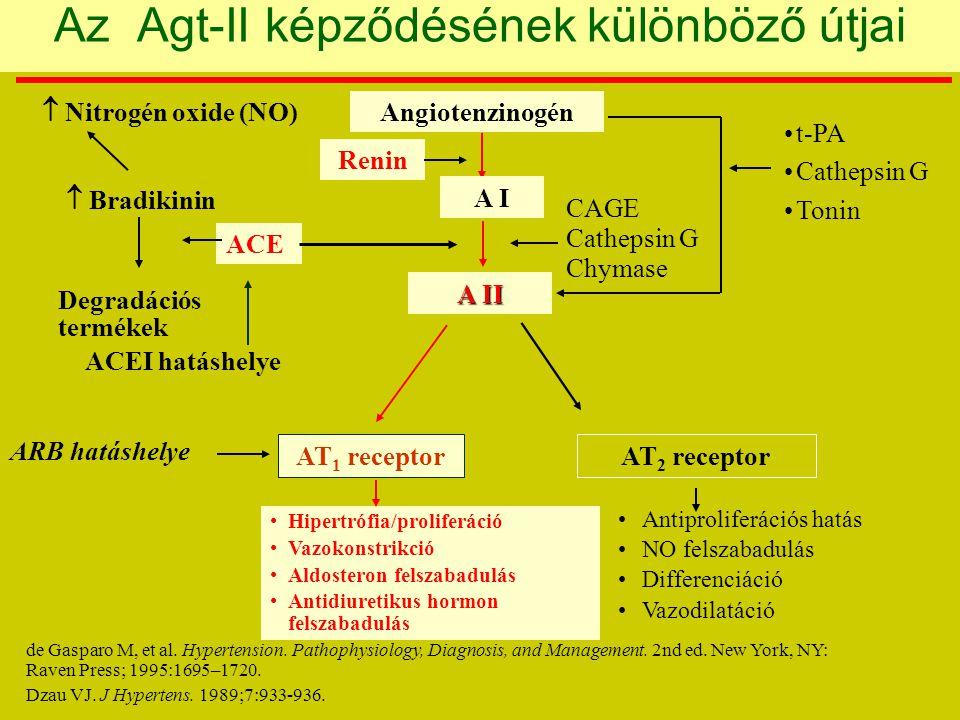 t-PA Cathepsin G Tonin Angiotenzinogén A I Renin A II CAGE Cathepsin G Chymase Antiproliferációs hatás NO felszabadulás Differenciáció Vazodilatáció Hipertrófia/proliferáció Vazokonstrikció Aldosteron felszabadulás Antidiuretikus hormon felszabadulás AT 1 receptorAT 2 receptor ARB hatáshelye ACEI hatáshelye ACE Degradációs termékek  Bradikinin  Nitrogén oxide (NO) Az Agt-II képződésének különböző útjai de Gasparo M, et al.