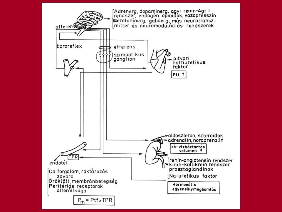 Autoreguláció Az érfal simaizom endogén sajátossága, hogy képes a szövetek aktuális anyagcsere állapotának megfelelően szabályozni a vérátáramlást Ha növekszik a perctérfogat az azt jelenti, hogy több vér áramlik át a szöveten mint amennyi szükséges VÁLASZ Az erek összehúzódnak, normál szintre csökkentik a vérátáramlást DE A perifériás rezisztecia nőni fog Az egyensúly egy magasabb szinten áll helyre